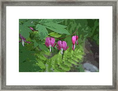 Bleeding Hearts 2 Framed Print
