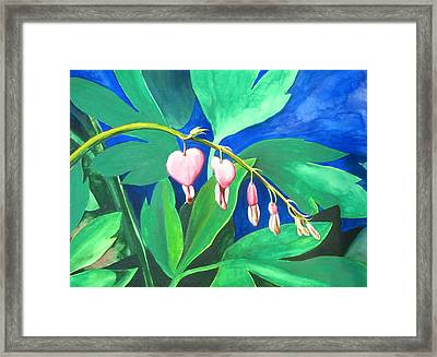Bleeding Hearts Framed Print by Carrie Auwaerter