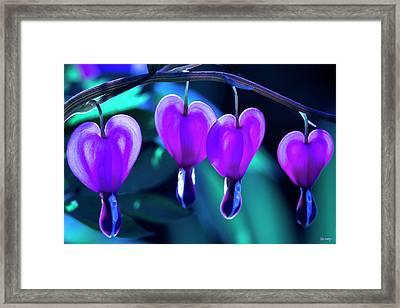 Bleeding Hearts In Moon Light Framed Print