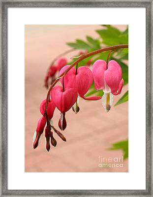 Bleeding Hearts In The Park Framed Print