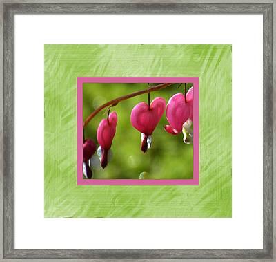 Bleeding Hearts Framed Print by Lori Seaman