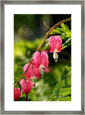 Bleeding Hearts With Fern Framed Print