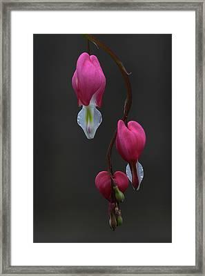 Bleeding Love Framed Print by Juergen Roth