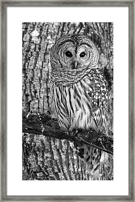 Blending In - 365-187 Framed Print
