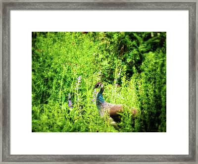Blending In Framed Print by Wim Lanclus