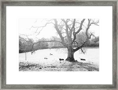 Blessed Framed Print by HweeYen Ong