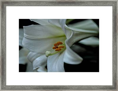 Framed Print featuring the photograph Blessings  by Connie Handscomb