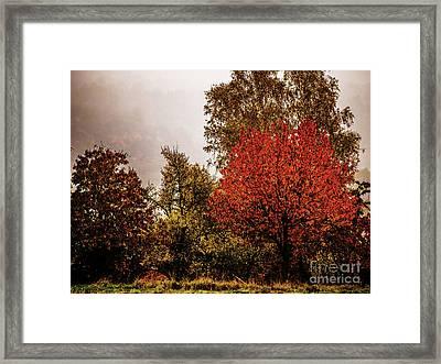 Bliesgau_07 Framed Print