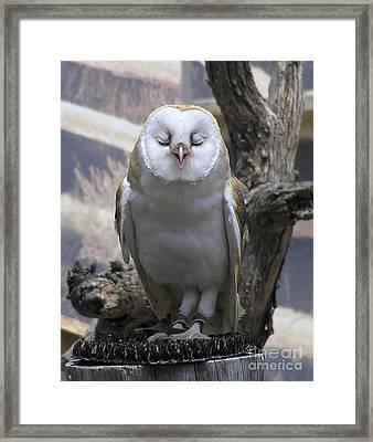 Blinking Owl Framed Print
