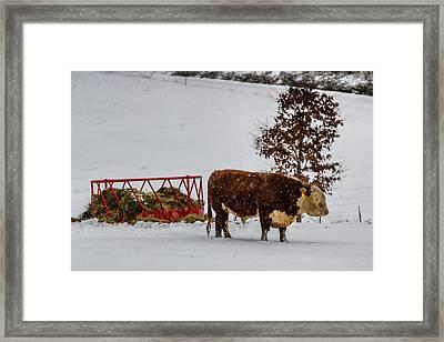 Blizzard Braving Bull Framed Print by John Haldane