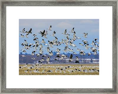 Blizzard Framed Print by Tony Beck