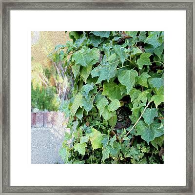 Block Of Ivy Framed Print