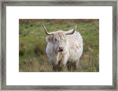 Framed Print featuring the photograph Blondie by Karen Van Der Zijden
