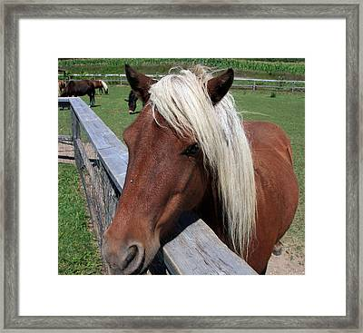 Blonds Have More Fun Framed Print by Joanne Coyle
