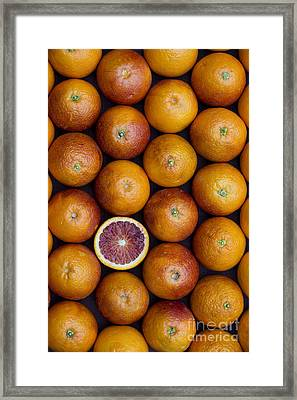 Blood Orange Fruits Framed Print by Tim Gainey