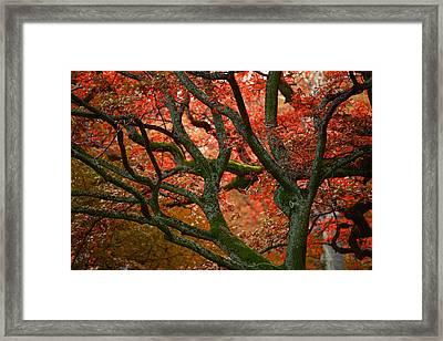 Blood Red Autumn Tree Framed Print by Sandra Rugina