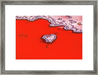 Blood Red Heart Reef Framed Print