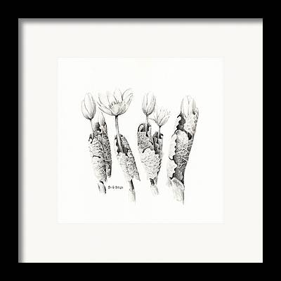 Maine Spring Drawings Framed Prints