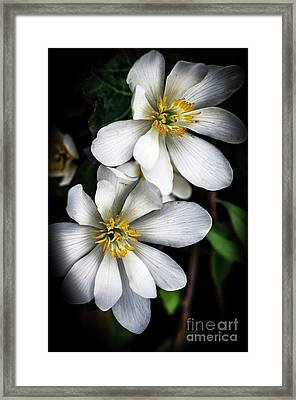 Framed Print featuring the photograph Bloodroot In Bloom by Thomas R Fletcher