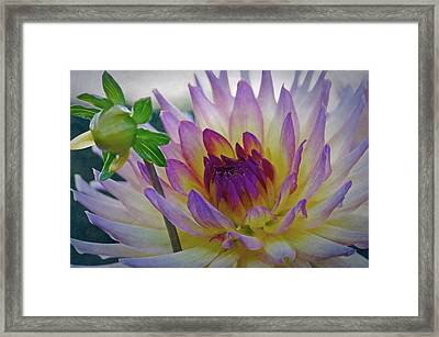 Bloom And Bud Framed Print