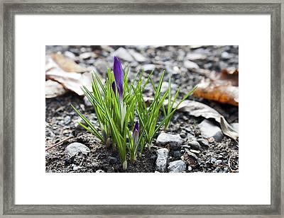 Bloom Awaits Framed Print
