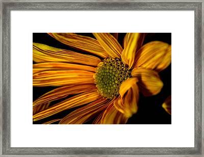 Bloom Bloom Framed Print