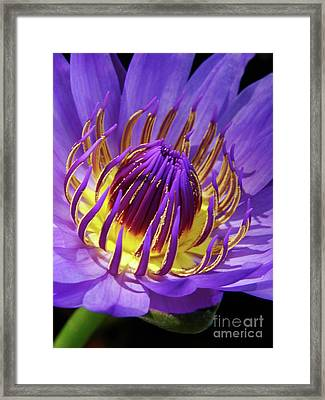 Bloom Burst Framed Print