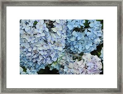 Bloom Cluster Framed Print by JAMART Photography