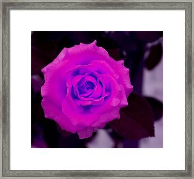 Bloom N Love-abstract Framed Print by Debbie May