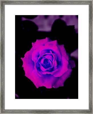 Bloom N Love Framed Print by Debbie May