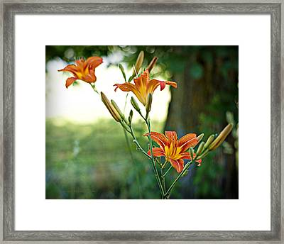 Bloom Where You're Planted Framed Print by Cricket Hackmann