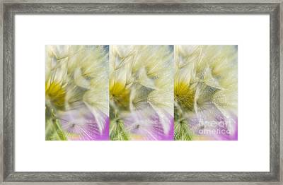 Bloomed 3 Framed Print