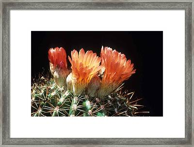 Bloomin' Barrel Framed Print by Laurie Paci