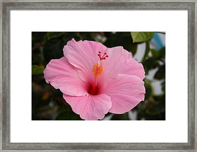 Bloomin Beauty Framed Print by Bradley Nichol