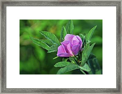 Framed Print featuring the photograph Bloomin by Glenn Gordon