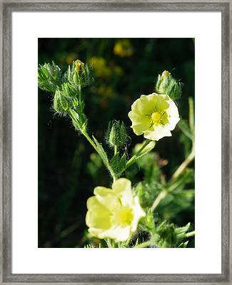 Bloomin Happy 1 Framed Print