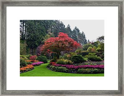Bloomin' Lovely Framed Print