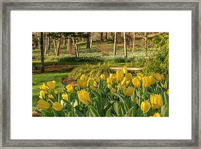 Bloomin Tulips Framed Print