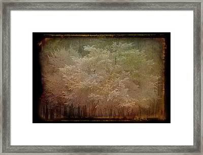 Blooming Antique Amber Framed Print by Aimee L Maher Photography and Art Visit ALMGallerydotcom