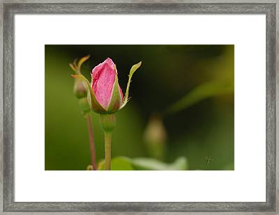 Blooming Framed Print by Arthur Fix