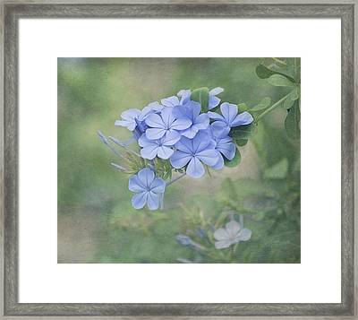 Blooming Blues Framed Print