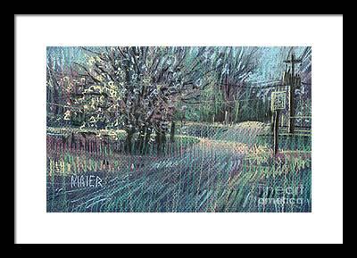 Blooming Tree Drawings Framed Prints