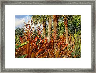 Blooming Bromeliads By H H Photography Of Florida Framed Print