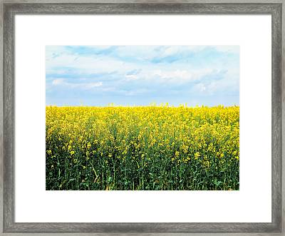 Blooming Canola - Photography Framed Print by Ann Powell