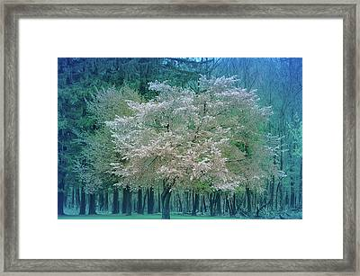 Blooming Cool Blue  Framed Print by Aimee L Maher Photography and Art Visit ALMGallerydotcom