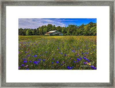 Blooming Country Meadow Framed Print
