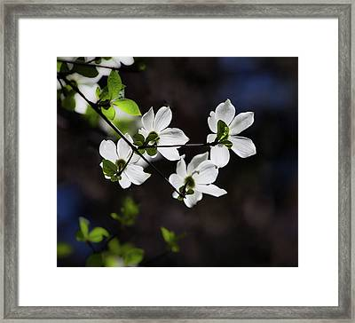Blooming Dogwoods In Yosemite 4 Framed Print by Larry Marshall