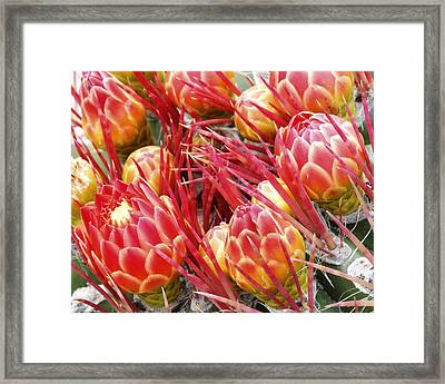 Blooming Framed Print by Eric Foltz
