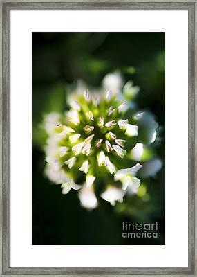 Blooming Flora Framed Print