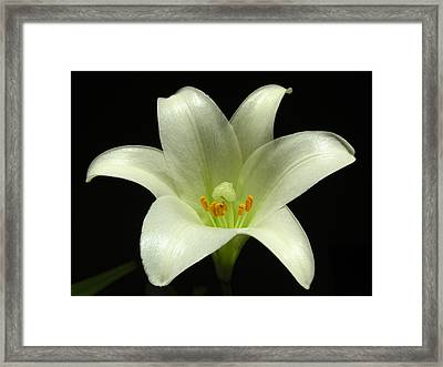 Blooming Flower Photography Framed Print